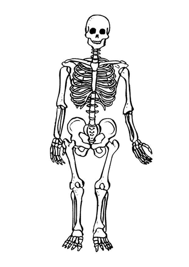 Dibujo para colorear Esqueleto - Img 9490