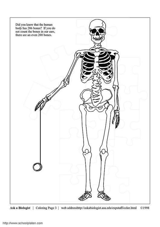 Dibujo para colorear Esqueleto - Img 3631