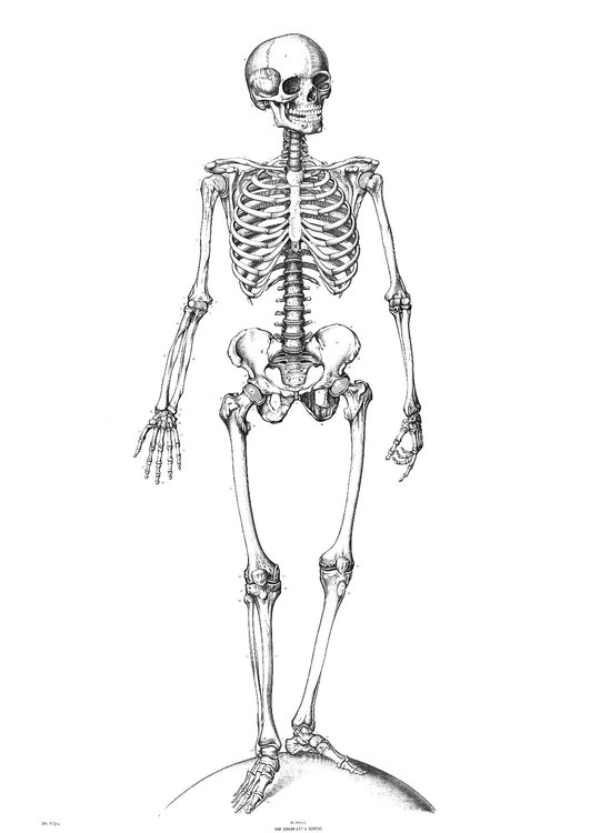 Dibujo para colorear Esqueleto - Img 9340
