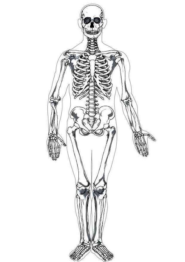 Dibujo para colorear Esqueleto humano - Img 7622