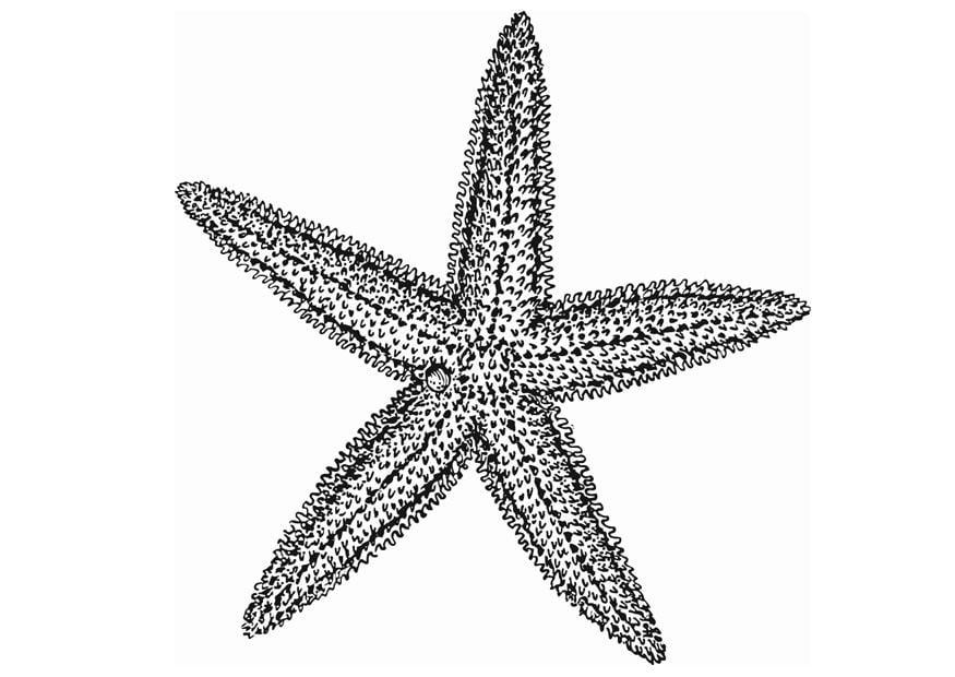 Dibujo para colorear Estrella de mar  Img 13077