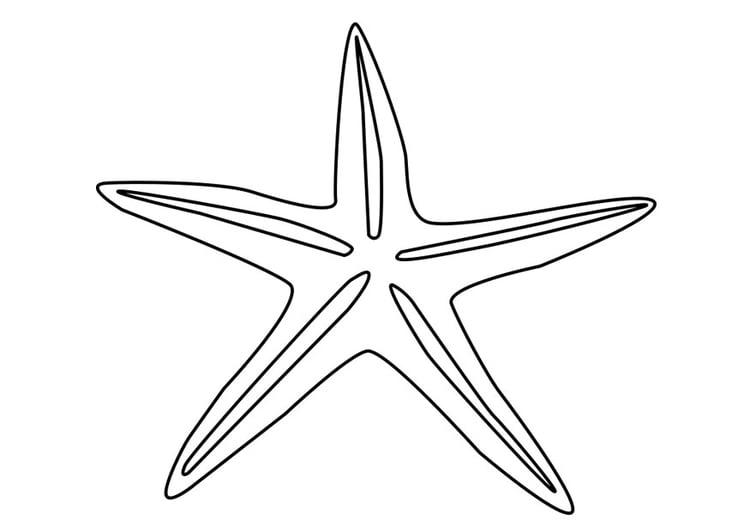Dibujo Para Colorear Estrella De Mar Img 27185