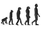 Dibujo para colorear Evolución