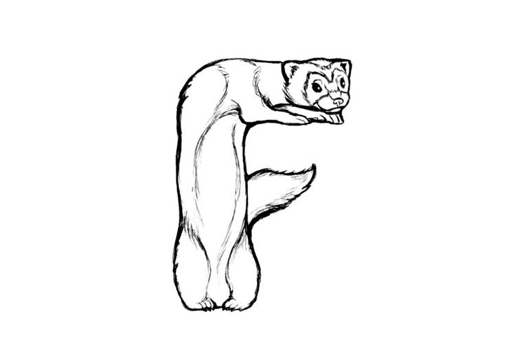 Dibujo Para Colorear F Ferret Img 24820