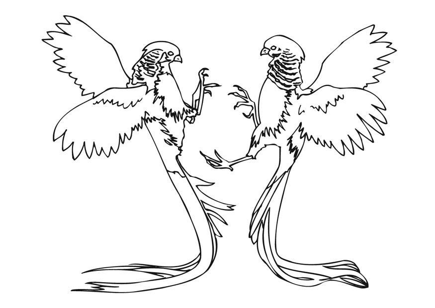 Dibujo para colorear Faisanes luchando - Img 9461