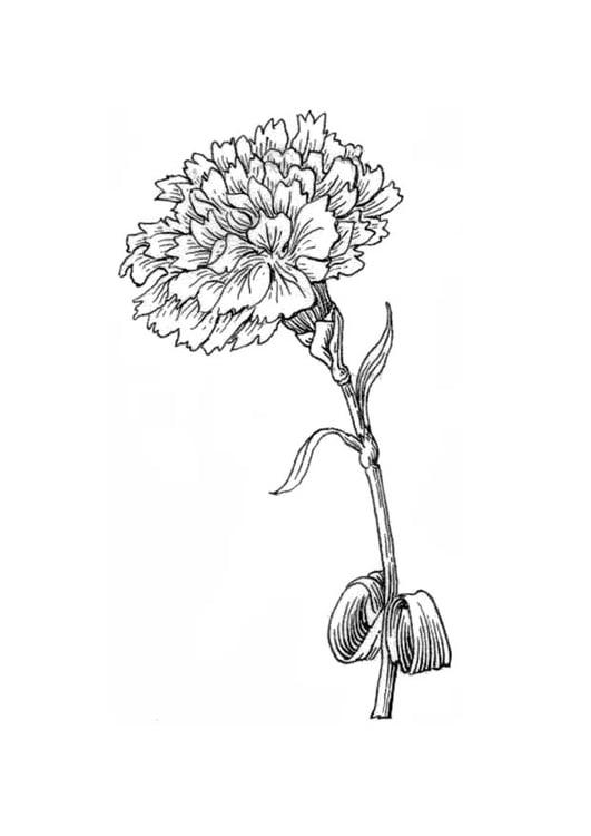 Dibujo para colorear flor - clavel - Img 18834