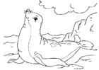 Dibujo para colorear foca