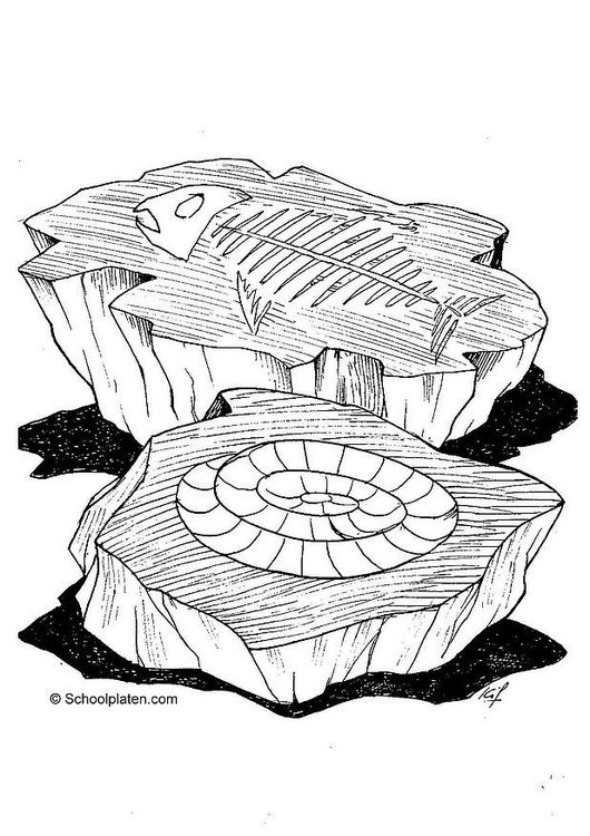 Dibujo para colorear Fósil - Img 2865