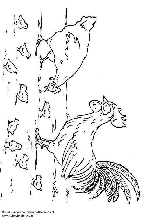 Dibujo para colorear Gallina, gallo y pollo - Img 8272