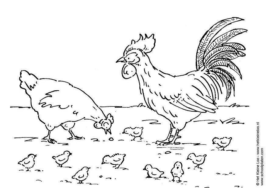 Dibujos Gallos Para Colorear: Dibujo Para Colorear Gallina, Gallo Y Polluelo