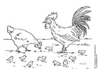 Dibujo para colorear Gallina, gallo y polluelo