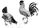 Dibujo para colorear gallina y gallo