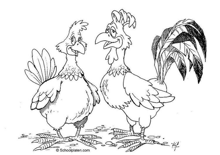 Dibujo Para Colorear Gallo Y Gallina Img 16869