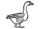 Dibujo para colorear ganso