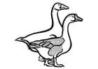 Dibujo para colorear gansos