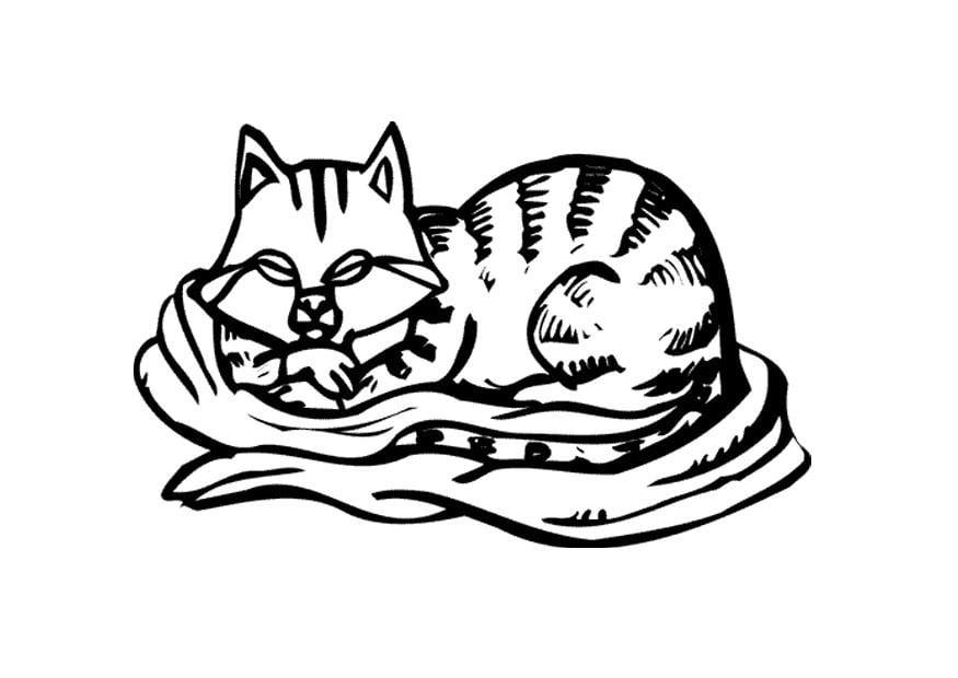 Dibujo Para Colorear Gato Img 11596 Images