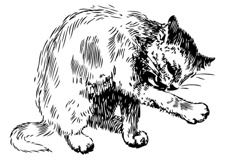 Dibujo para colorear gato - Img 17447