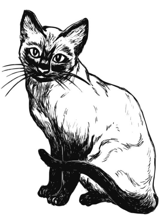 Dibujo para colorear gato - Img 18573