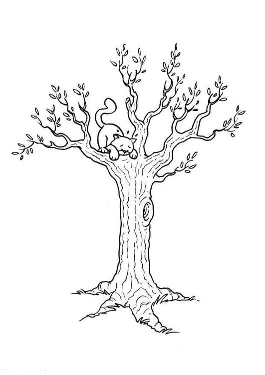 Dibujo Para Colorear Gato En árbol Dibujos Para Imprimir