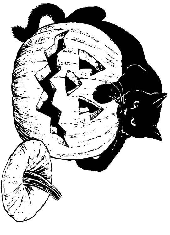 Dibujo para colorear Gato negro sobre calabaza - Img 16556