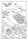 Dibujo para colorear gaviotas