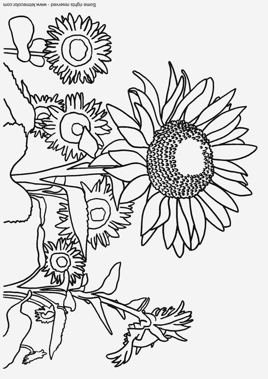 Dibujo para colorear Girasoles - Img 9791