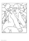 Dibujo para colorear Gorila