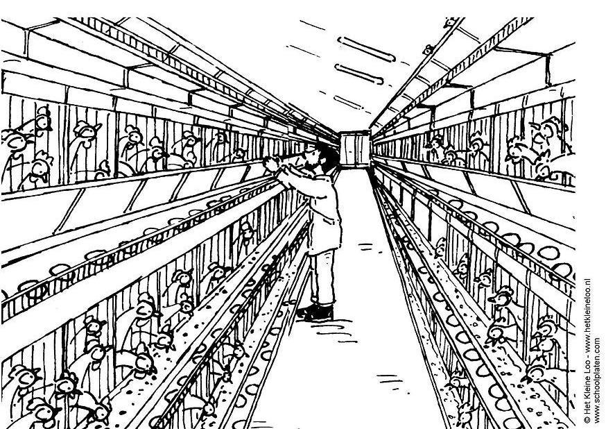 Dibujo para colorear Granja de aves  filas de jaulas  Img 3733