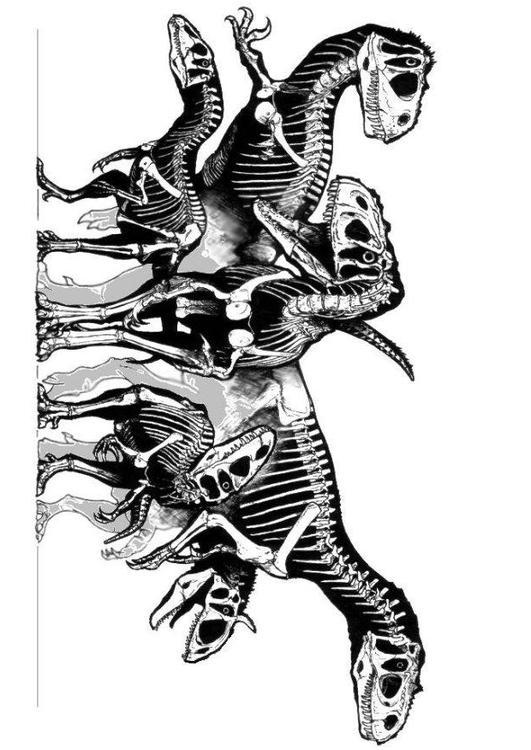 Kleurplaat Frederik Dibujo Para Colorear Grupo De Esqueletos De Dinosaurios