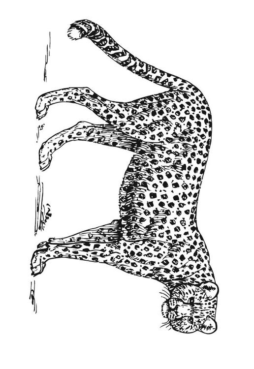 Dibujo para colorear Guepardo - Img 15727