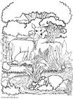 Dibujo para colorear Hada con venado