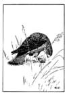 Dibujo para colorear halcón