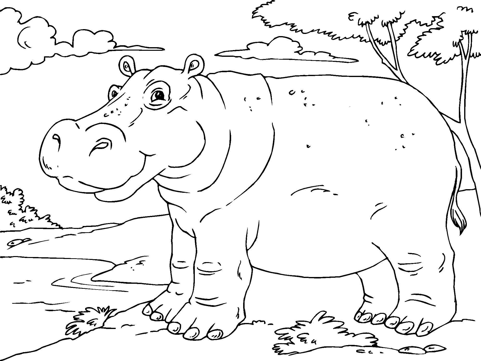 Dibujo para colorear hipopótamo - Img 23011