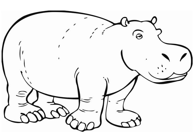 Dibujo para colorear Hipopótamo - Img 12842