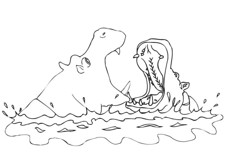 Dibujo para colorear Hipopótamo - Img 9456
