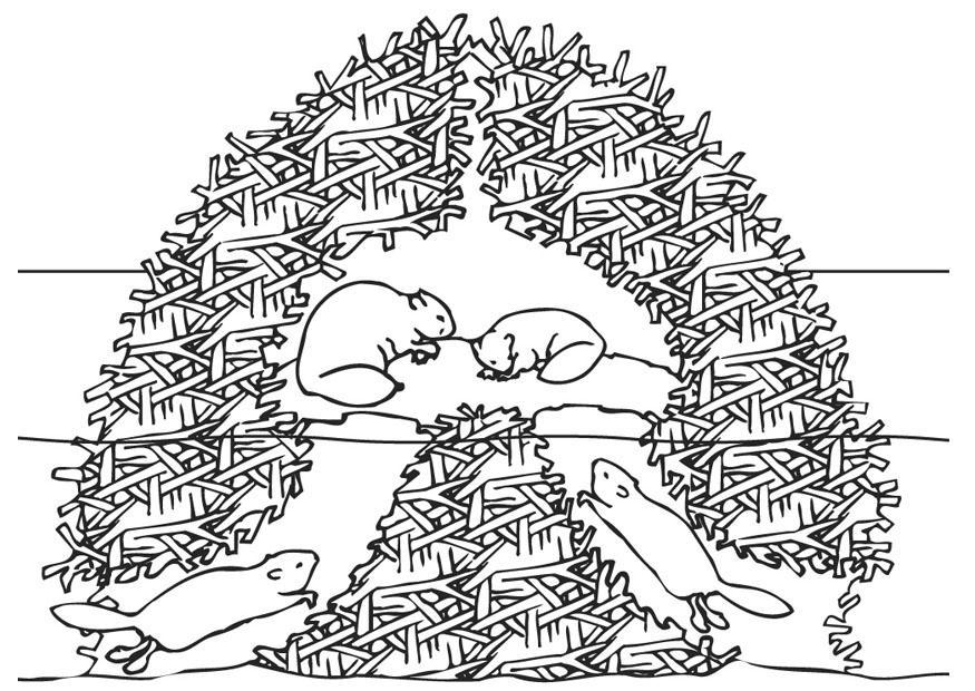 Dibujo Para Colorear Hogar De Los Castores Img 9448