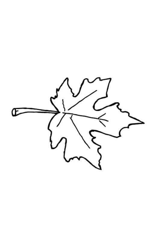 Dibujo para colorear Hoja de otoño - Img 9601