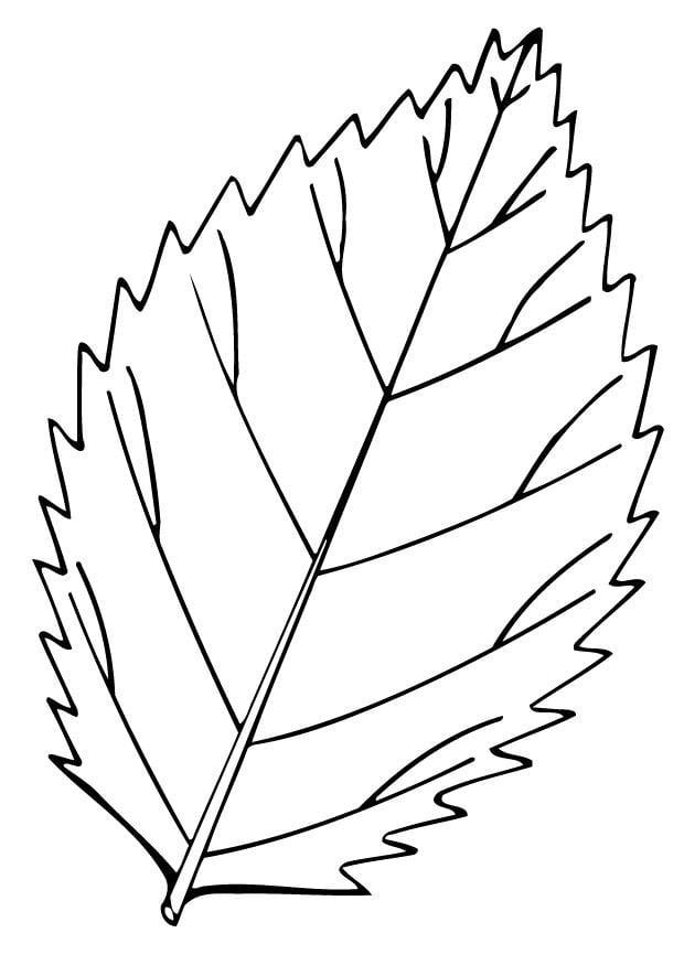 Dibujo para colorear Hoja - Img 12948