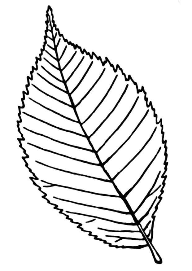Dibujo para colorear hoja - Img 18898