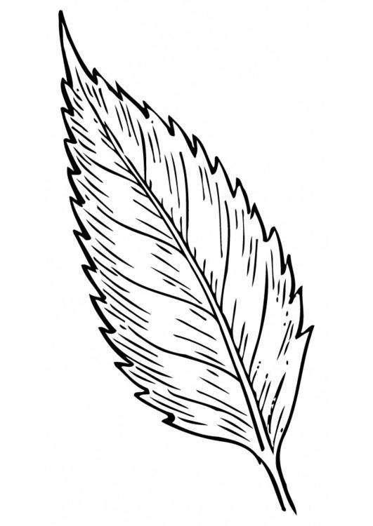 Dibujo para colorear Hoja - Img 12949