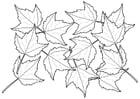 Dibujo para colorear hojas