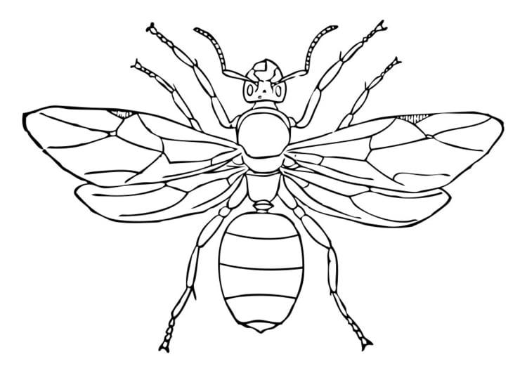 Dibujo para colorear hormiga reina  Img 28338