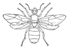 Dibujo para colorear hormiga reina