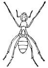 Dibujo para colorear hormiga