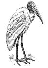 Dibujo para colorear ibis