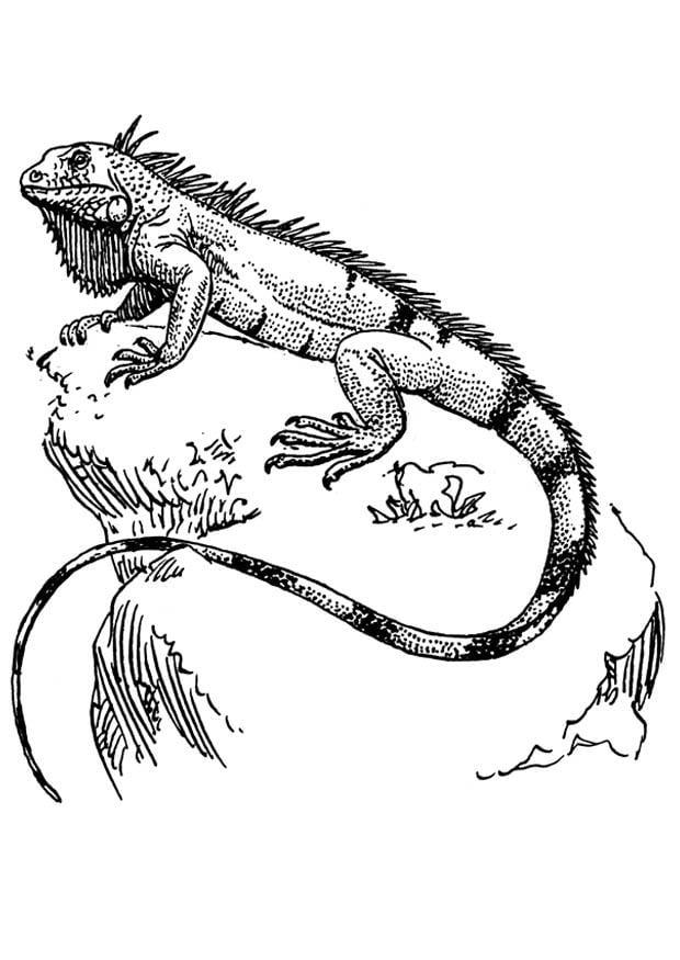 dibujo para colorear iguana