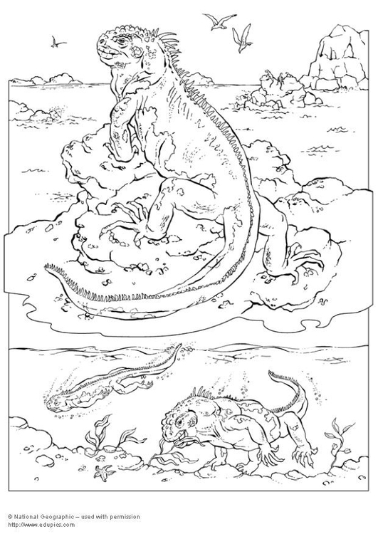 Dibujo para colorear Iguana - Img 5741