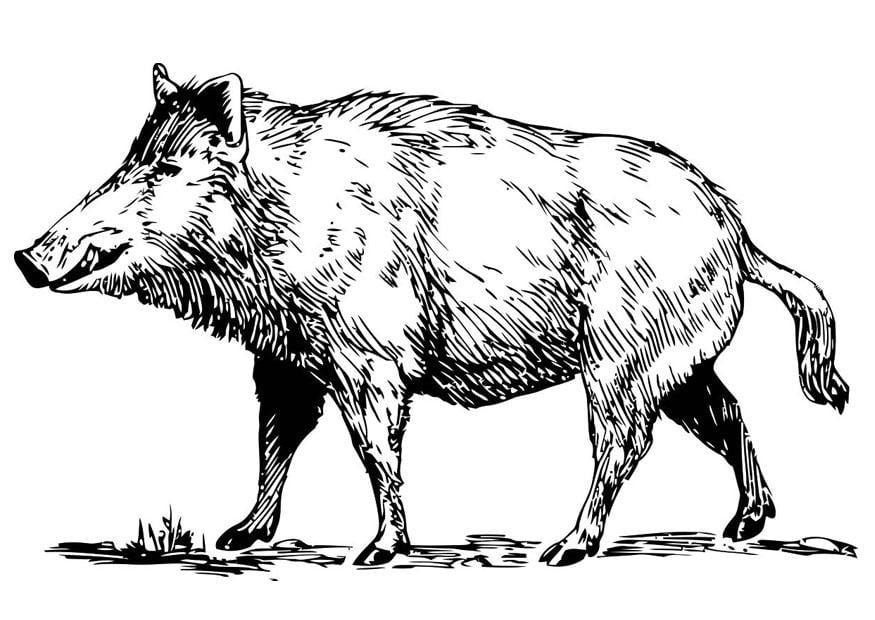 Dibujo para colorear jabal img 19456 - Dessin de chasse ...