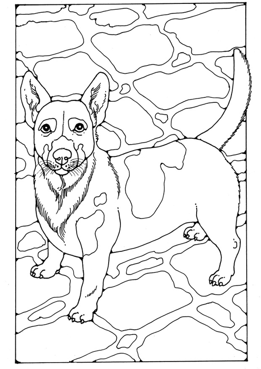 Dibujo para colorear Jack Russell