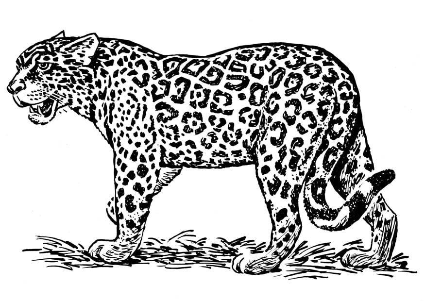 Dibujo para colorear jaguar  Img 16636